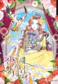 Cavier Falcon Princess